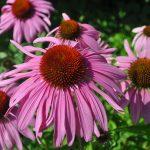 5 สมุนไพรดีจากธรรมชาติที่ช่วยต้านและบรรเทาไข้หวัด