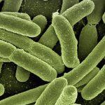 เชื้อโรค (Pathogen)