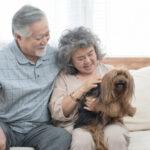 เพื่อนรักสัตว์เลี้ยง ลดความเครียดหลังวัยเกษียณ